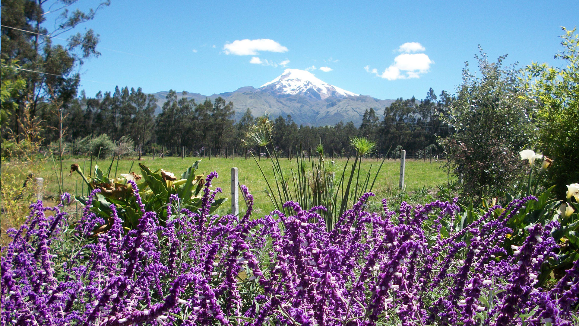 AT THE FOOT OF THE CAYAMBE VOLCANO